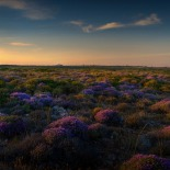 Wild Thyme Fileds, Tenedos. Panoramic stitch and HDR