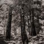 On the Hills of Mt. Ida