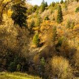 Yellow fall on Mt. Nebo