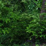 Lush Spring Green