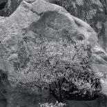 Spring in Cappadocia, Goreme National Park