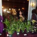 Orchids for sale, a couple of Degarmoara as well