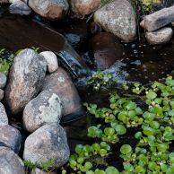 A small waterfall with water hyacinths