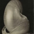 Edward Weston - Shells