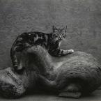 Edward Weston - Johnny