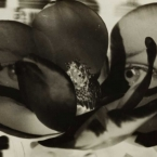 Man Ray - Magnolia