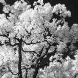 Trees aglow