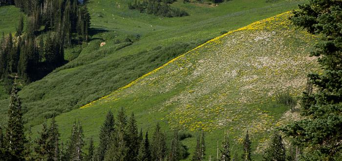 Wild Flowers of Salt Lake City Canyons