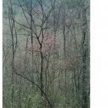 Eliot Porter - Intimate Landscapes