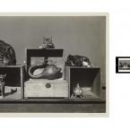 Edward Weston - Cats