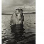 Hansel Mieth - Mad Monkey