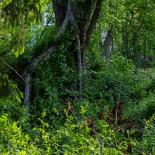 Wilderness Nextdoor