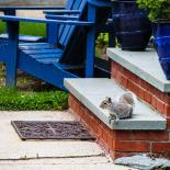 A Neighbor