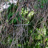 Wilderness Curtain