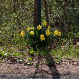 Springtime #4