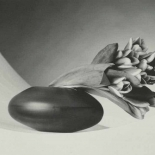 Robert Mapplethorpe - Tulips