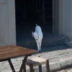 One of the many cats on the island