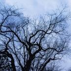 Trees in the neighborhood