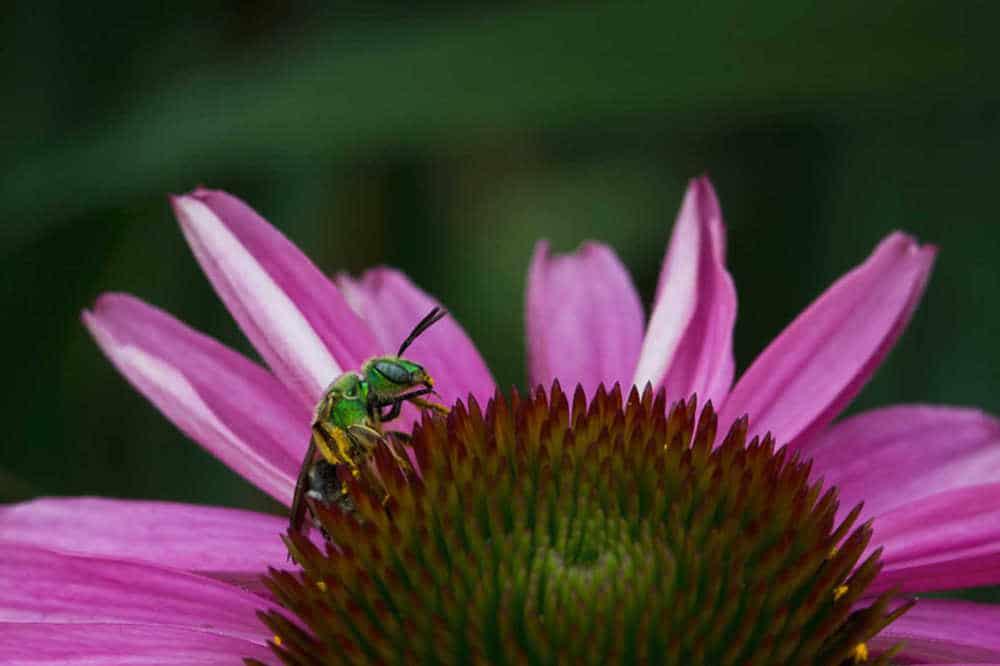 Ekin's Garden Spring-Summer 2011
