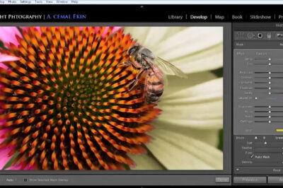 Replace Color in Lightroom