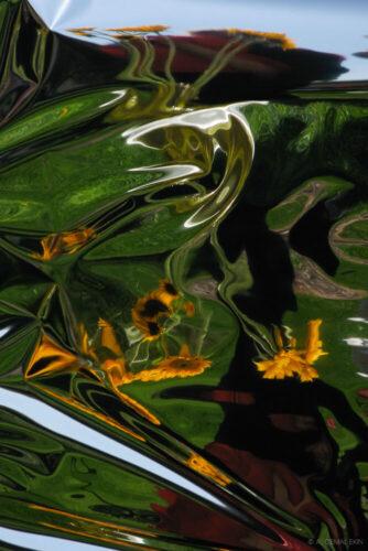 Bent Sunflowers