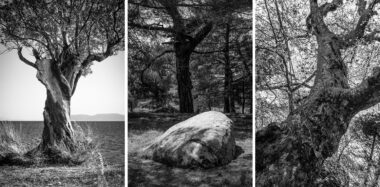 Trees of the Aegean