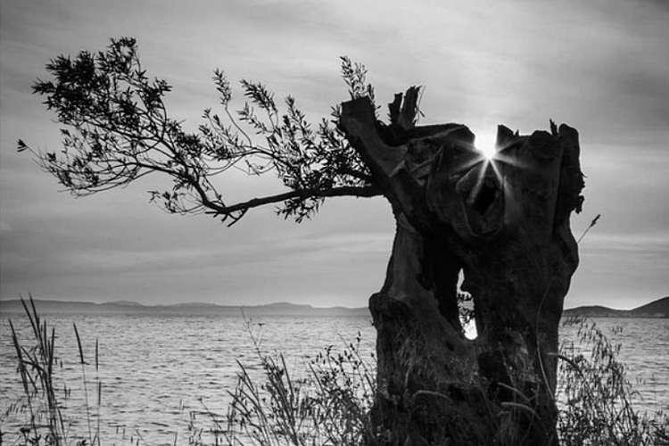 Trees of the Aegean Exhibit