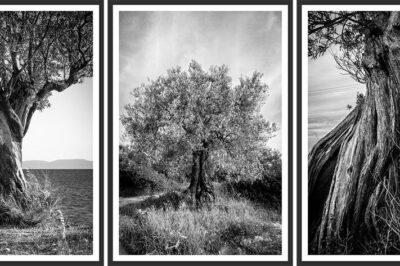 Trees of the Aegean Exhıbıt
