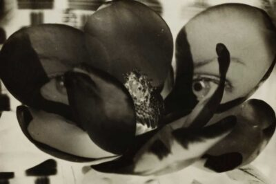 Man Ray - Magnolia from photography auctions