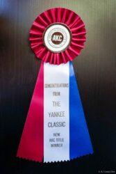 Karma AKC Championship Ribbon