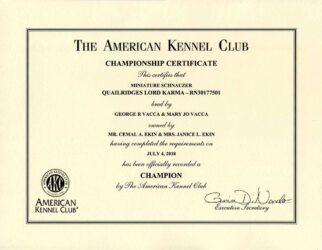 Karma's AKC Certificate of Championship
