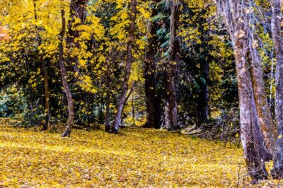 The Falling Leaves on Mt. Nebo