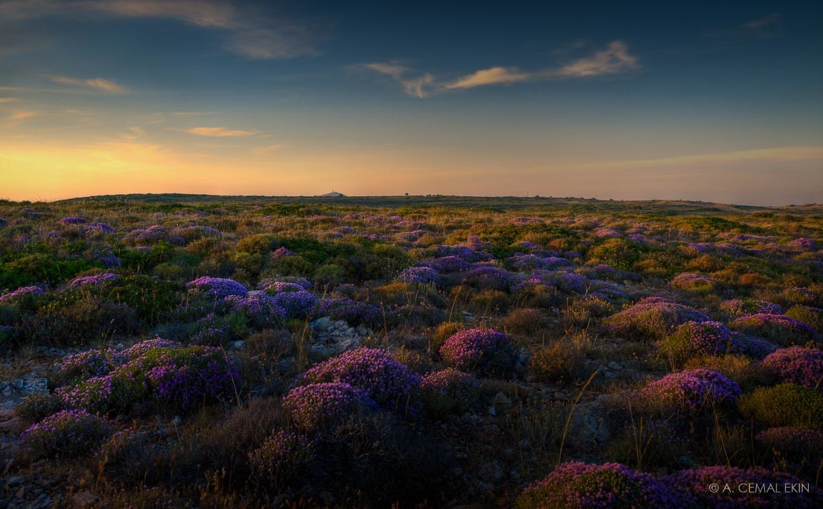 Wild Thyme Fields, Tenedos, panorama, HDR