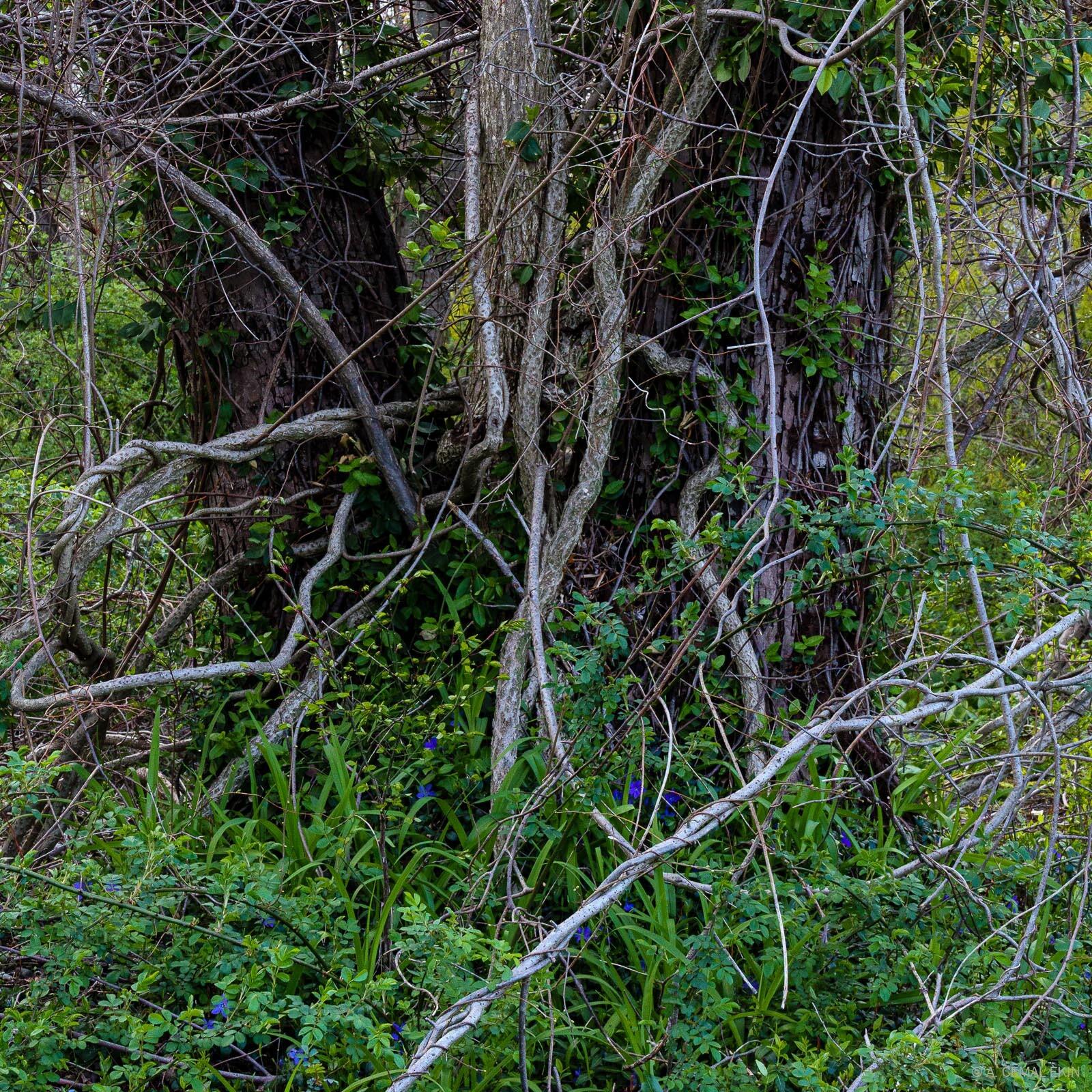 Peripheral colors in the wilderness next door