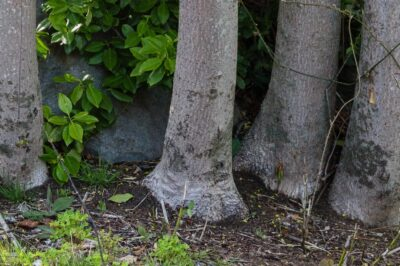 Tree trunks pretending to be an elephant