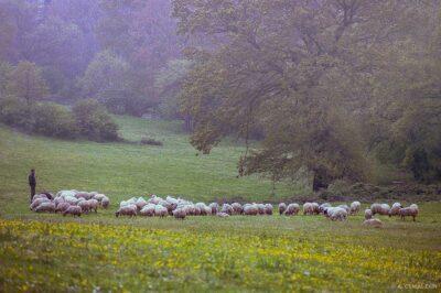 Pastoral, Altunizade, Istanbul, 1987