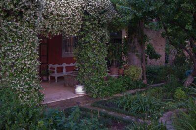 Dusk at Melin House garden
